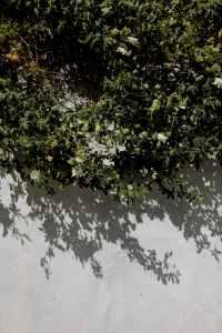 pexels-photo-3006003