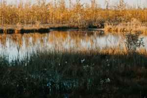 pexels-photo-1334142